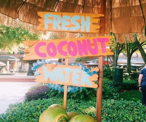 summer, coconut, and tropical image