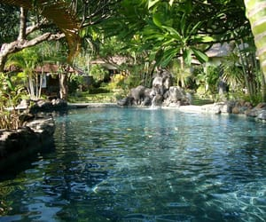 summer, tropical, and water image