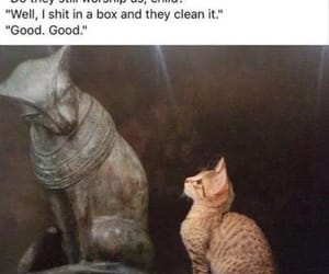 cat, meme, and funny image