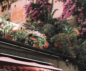 aesthetic, flowers, and street image