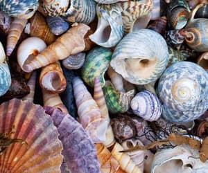 beach, shell, and summer image