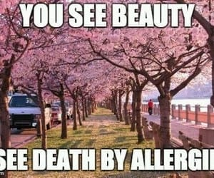 allergic, flowers, and funny image