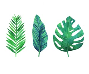 leaves, overlay, and png image