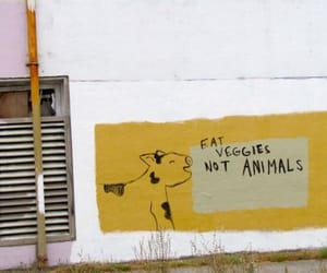 animals, vegan, and vegetarian image