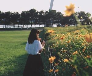 flower, garden, and girassol image