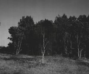 Image by Gino Pec
