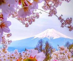 belleza, flores, and montaña image