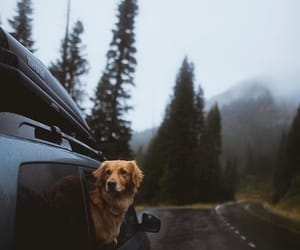 dog, animal, and nature image