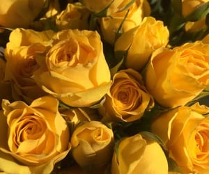 yellow, flowers, and rose image