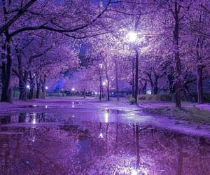 aesthetic, cherry blossom, and nature image