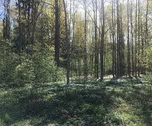 finland, green, and summer image