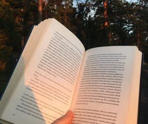 forest, reading, and golden hour image