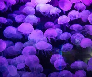 purple, jellyfish, and glow image