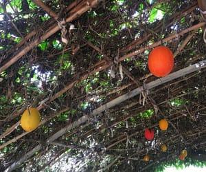 fruit, thailand, and kingrama9 image