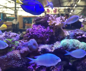 coral, dory, and fish image