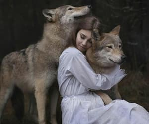 wolf, animals, and beautiful image