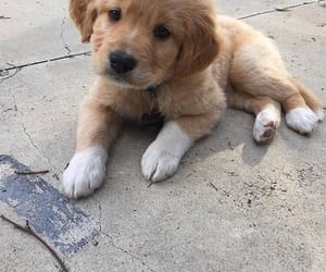 puppy and cute image