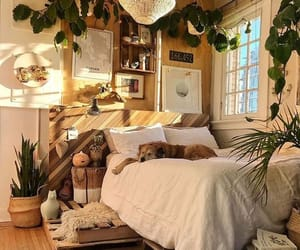 dog, room, and plants image