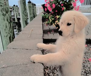 dog, kawaii, and outdoors image