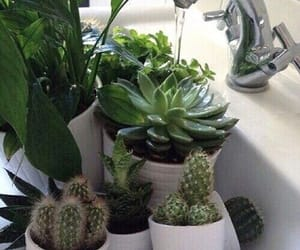 I live for plant aesthetics