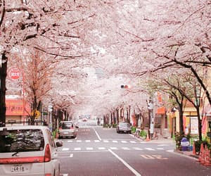 japan, pink, and street image