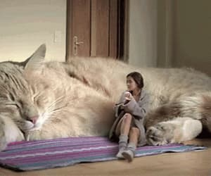 cat, big, and gif image
