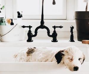adorable, dog, and furry image