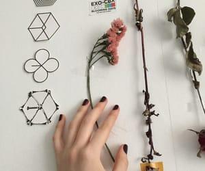 exo, flower, and minimalist image