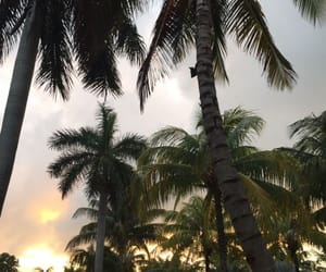 palm trees and theme image