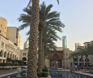 palm trees, luxury, and place image
