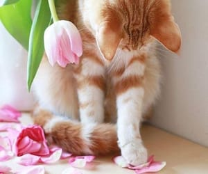 adorable, flowers, and beautiful image