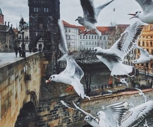 city and pigeon image