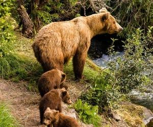 Animales, naturaleza, and osos image