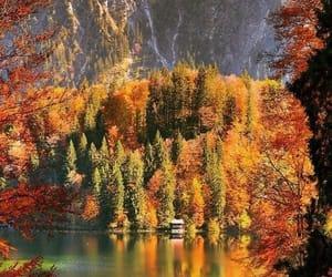 arboles, belleza, and lago image