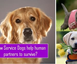 your road to healthy life, humans best friends, and service dogs image