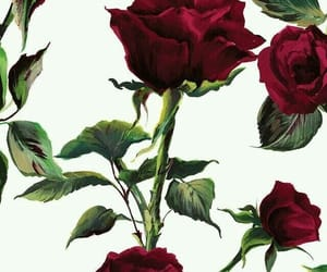 rose, wallpaper, and red image