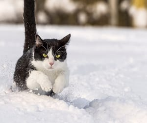 snow, cat, and winter image