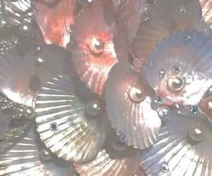 aesthetic, pink, and seashell image