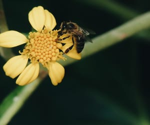 nature, yellow, and bee image