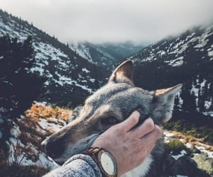 adventures, dog, and grey image