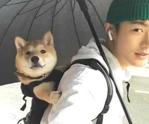 asian, boy, and dog image