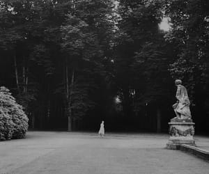 black and white, garden, and photography image