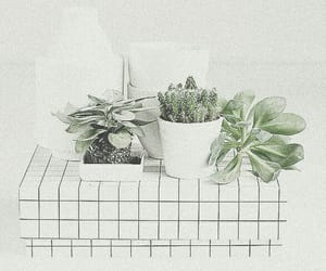 plants, white, and aesthetic image