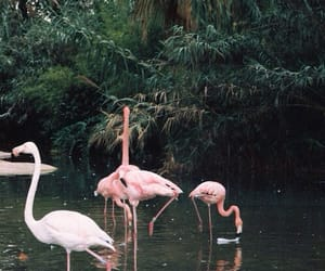 green, flamingo, and pink image