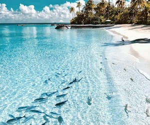 beach, clear, and fish image