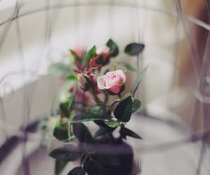 Image by zm