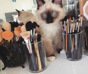 makeup, photography inspiration, and summer cosmetics image