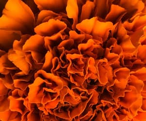 aesthetic, marigold, and flowers image