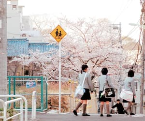 japan, sakura, and school image