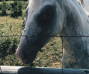 animal, farm, and fence image